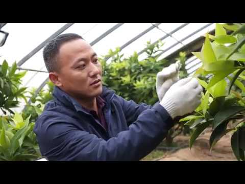 LoRa IoT Solution Deployed in Greenhouses | Growing Tropical Fruits in North