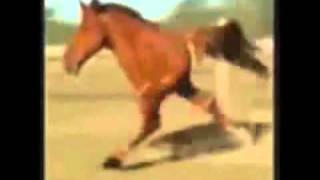 retarded running horse for 1 hour