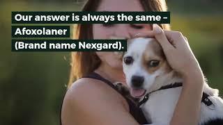 Effectiveness Of Afoxolaner (Nexgard) against Fleas and Ticks