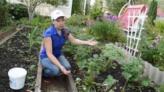 Чем подкормить клубнику в сентябре