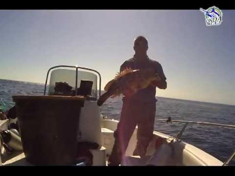 La pesca con trucchi video su YouTube