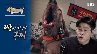 [Full] 세상에 나쁜 개는 없다 - 괴물이 된 개 구찌