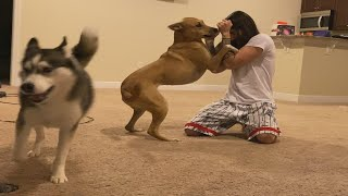I Taught My Dogs MMA