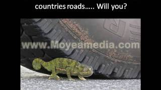 Wildlife Road Traffic Accidents