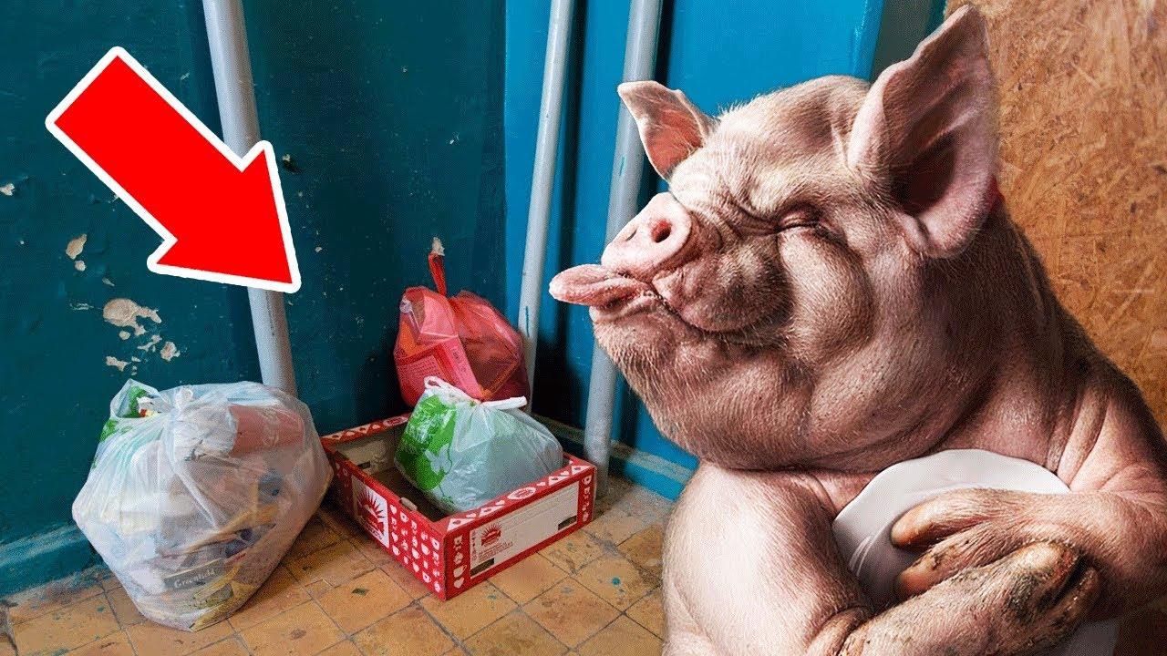 интернет картинки про свиней которые мусорят знали творческой деятельности