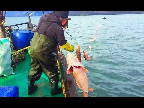 Один из Самых Интересных Рыбалок в Море на - КРЕВЕТОЧНУЮ РЫБУ КОНГРИО