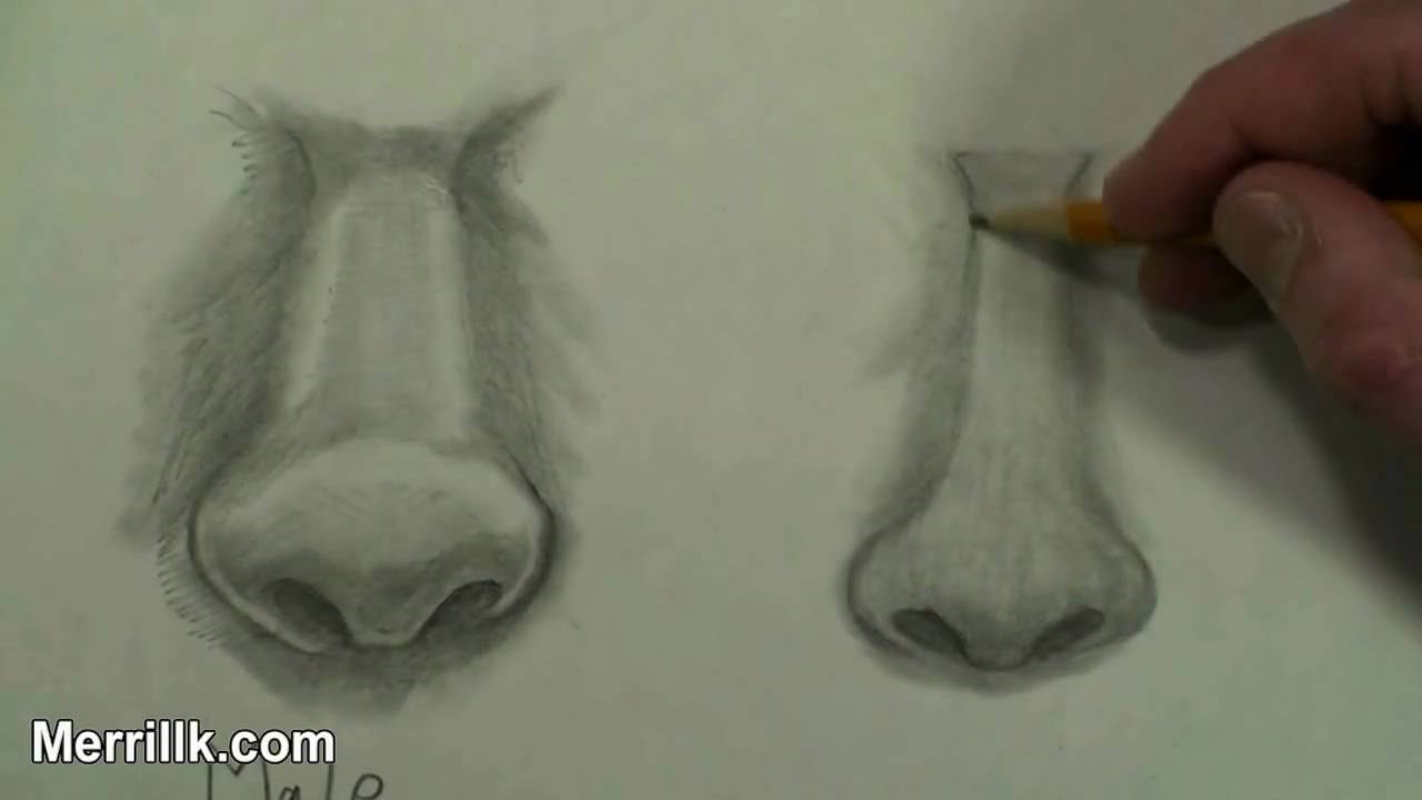 Master Drawing The Female Nose (how To Draw Step By Step Instruction)   Youtube