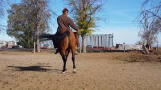 Celebrity Apprentice QH Stallion Liberty Reining2 | Jessica Dennison