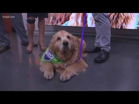 Seattle celebrity dog Dash helps raise money to fight cancer