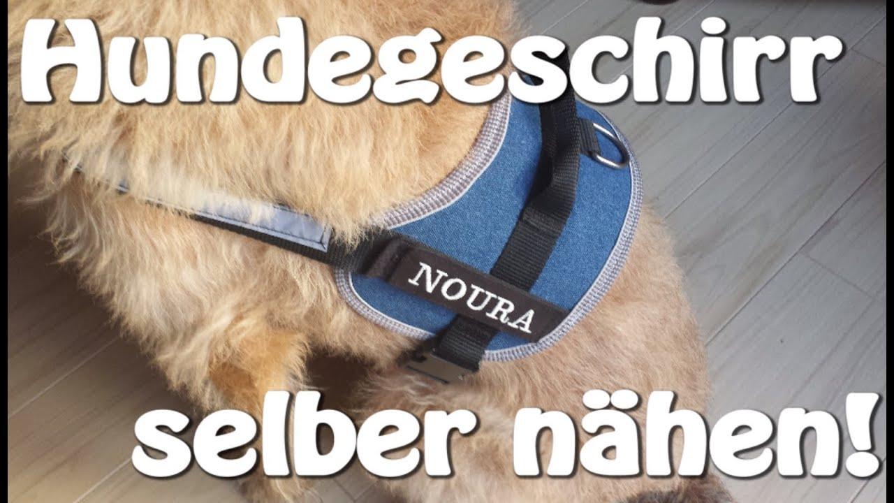 HUNDEGESCHIRR SELBER NÄHEN | DIY | Nähen für Anfänger | Tutorial ...