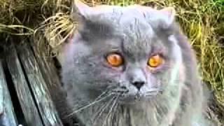 Кот под валерьянкой=)