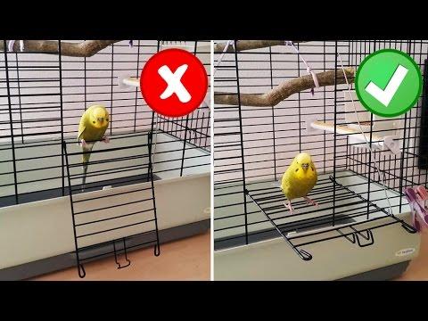 Muhabbet Kuşu | Kafes Tüyoları