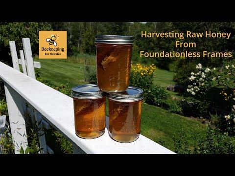 Harvesting Raw Honey From Foundationless Frames