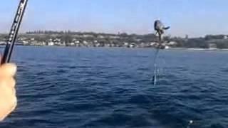 Морская рыбалка Мурманск.Териберка.Колький полуостров. Ловля трески.