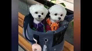 Very cute puppies vol.7
