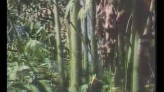 Video Krai Thong 2 - 1985 download MP3, 3GP, MP4, WEBM, AVI, FLV Desember 2017