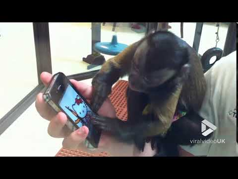 Corey & Patrick In The Morning - This Monkey Frustrated With an iphone is Me In So Many Ways!