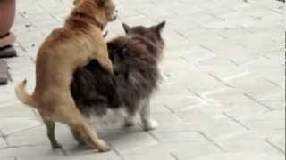 Repeat youtube video Dog & Cat making love