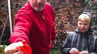 видео Жемчужина вашего сада