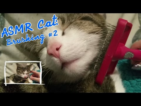 ASMR Cat: Purring and Brushing #2 (no talking) [Requested]