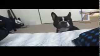 Anjing Lucu Dan Pintar Ini Bangunin Majikannya Yg Lg Tidur
