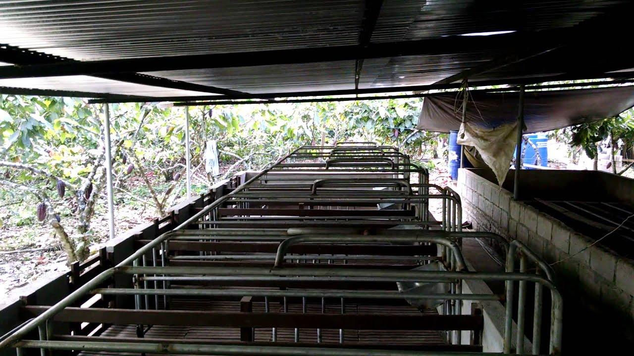 Maternidades de Cerdos, Jaulas y pisos de madera plastica....La ...