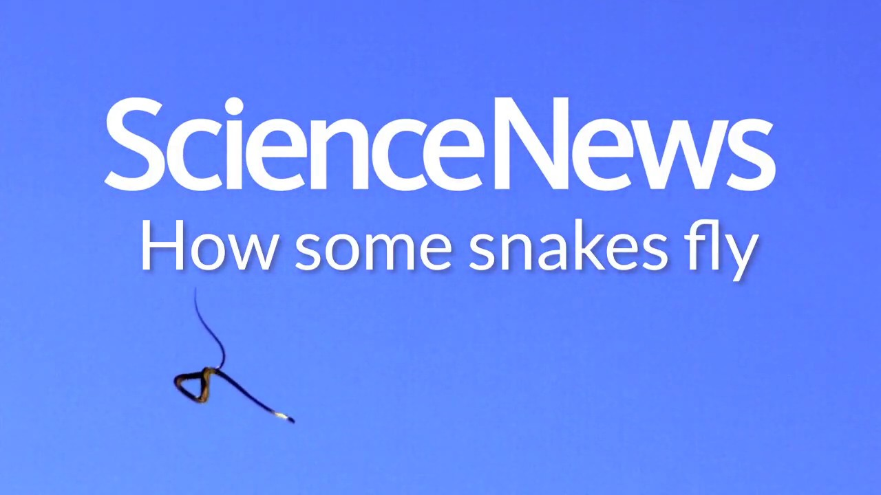 How some snakes fly | Science News