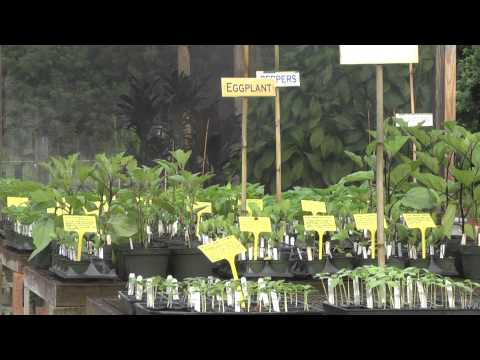 Discover Martin County, FL - Palm City- Shadowood Organic Food Garden