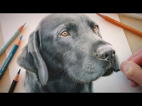 drawing-a-dog---'jack'-the-black-labrador