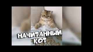 BugagaTV НАЧИТАННЫЙ КОТ   Подборка Приколов Март # 1
