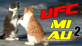 BRIGA DE GATOS ENGRAÇADOS  2 - THE ULTIMATE CAT FIGHT