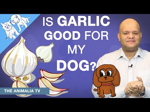 Is Garlic Good For My Dog