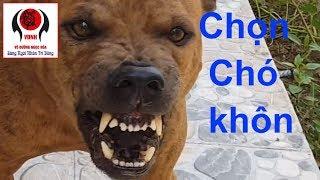 Cẩu tướng pháp - Kinh nghiệm dân gian chọn chó khôn: Tập 1
