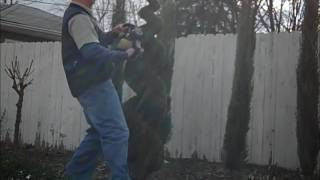 How to prune a topiary spiral shrub DIY