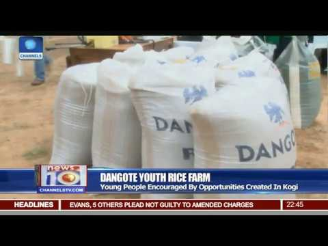 Dangote Flags Off Youth Rice Farm Project In Kogi
