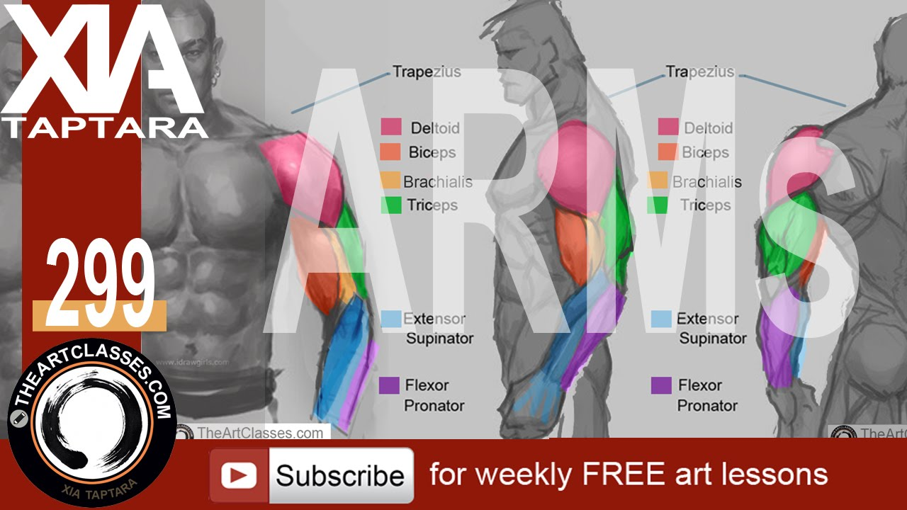 How To Draw Muscular Arms Anatomy Drawing Youtube