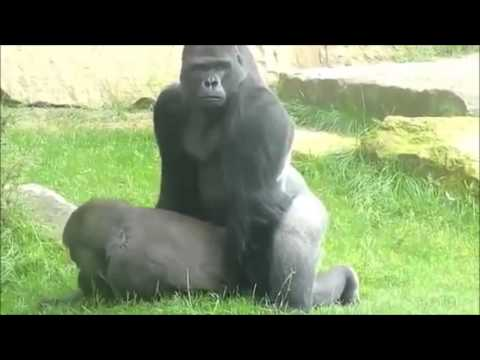 bruno mars gorilla official music video