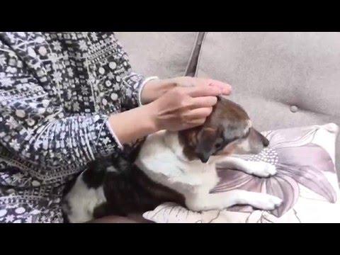 Diabetic Dog Glucose Test