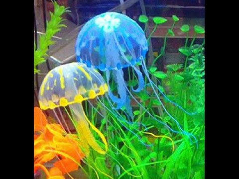 Fake Jellyfish Tank Doovi