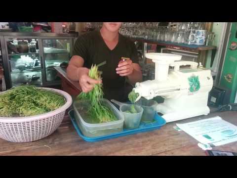 Wheat grass shots in Pai Thailand