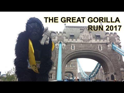 IAN REDMOND WALKS 8KM ON HIS KNUCKLES FOR GORILLAS