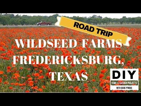 Wildseed Farms, Fredericksburg, Texas