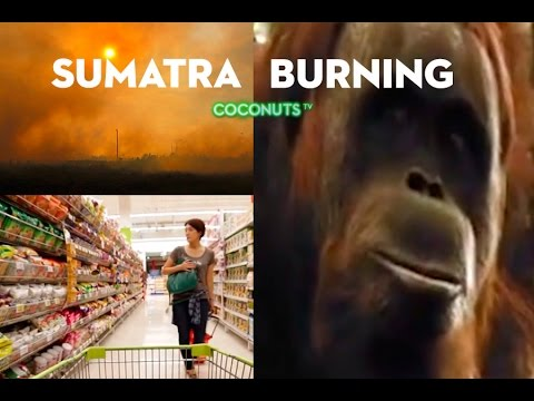 Sumatra Burning: The heart of palm oil (PART 1)