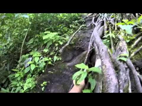 Upper Manoa Falls (Spider Pig Edition)