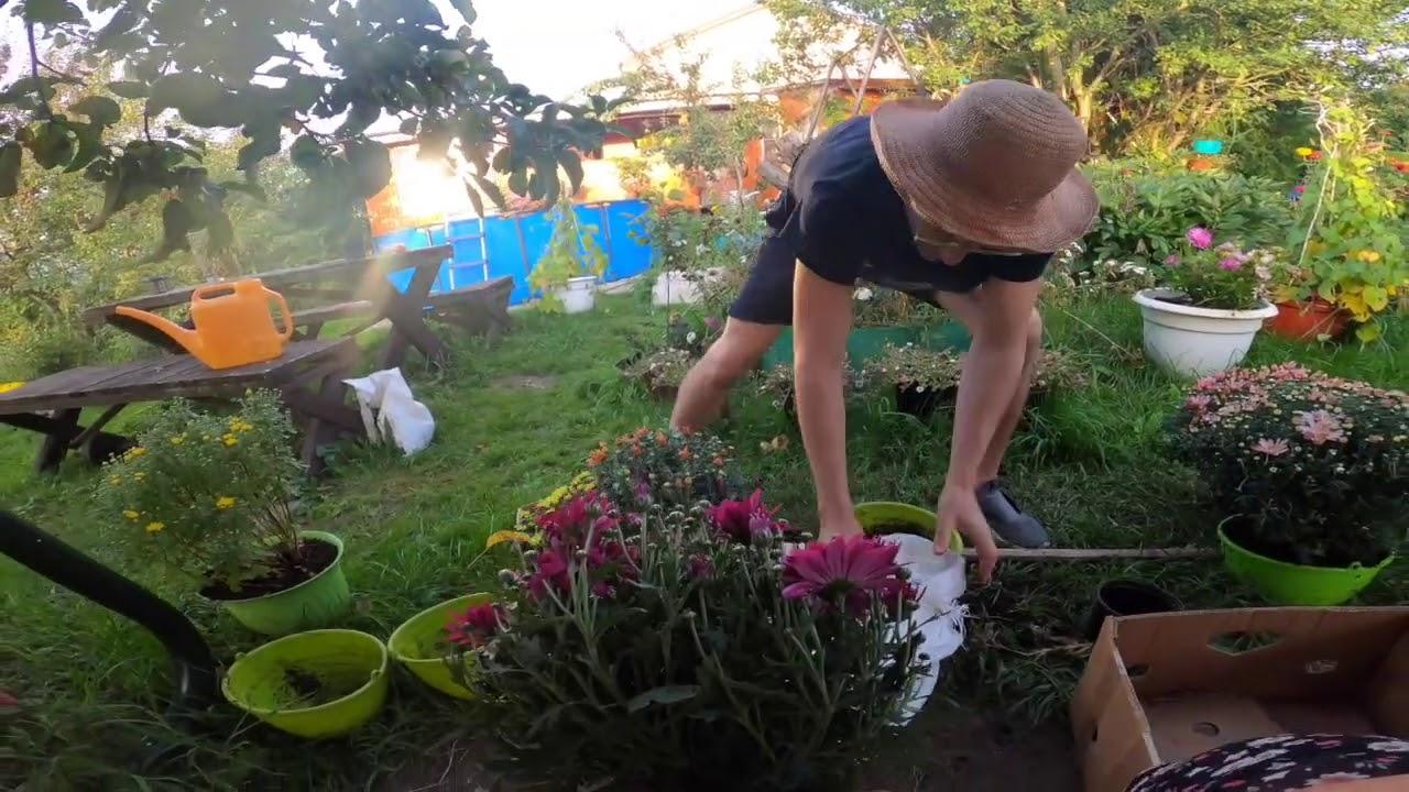 семейные посиделки Цветы Продлеваем лето !!!  жизнь в деревне