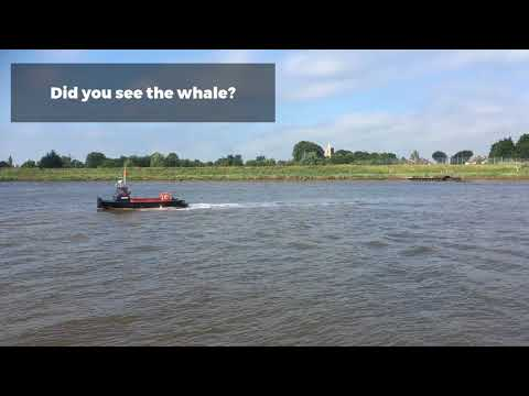 Whale Spotted In King's Lynn River