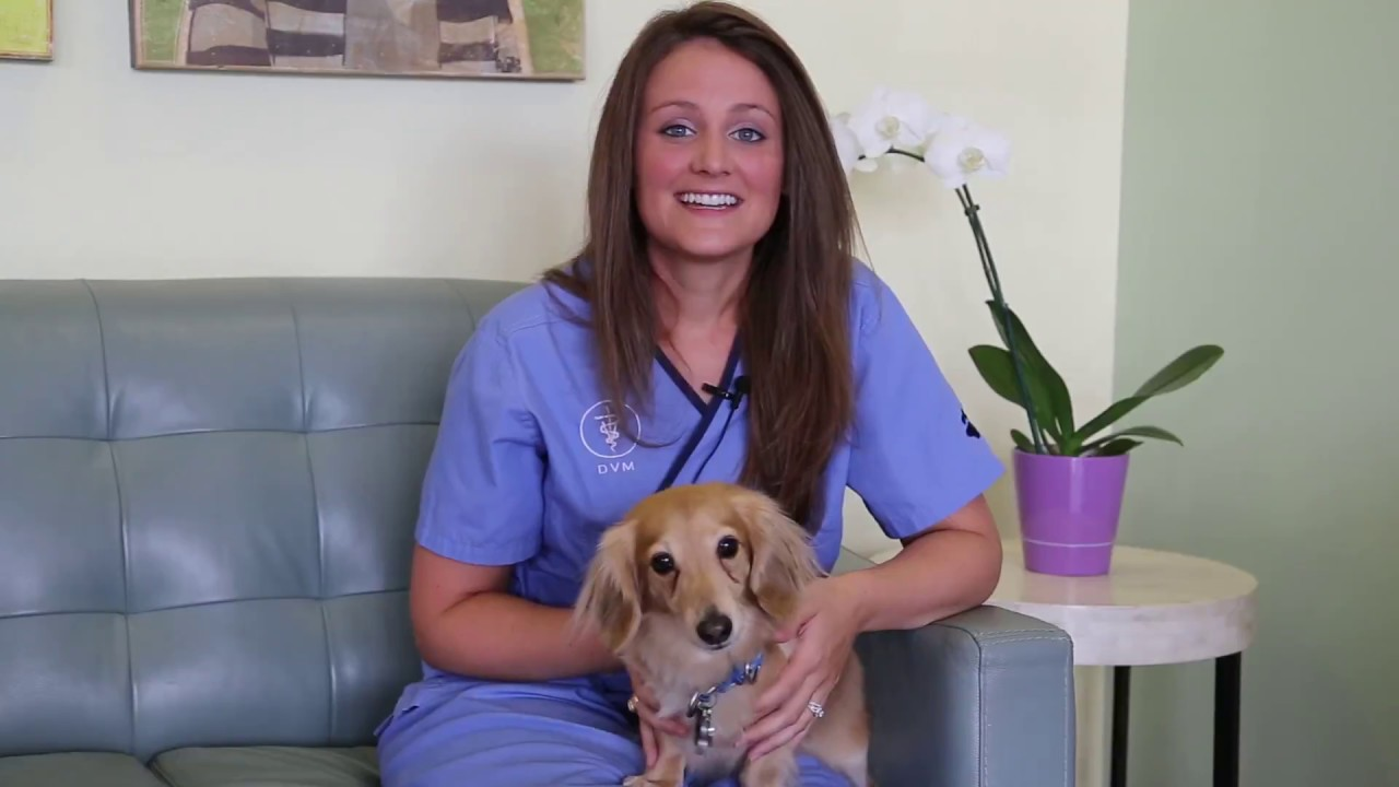 Most Common Pet Toxins - Animal Oasis Veterinary Hospital Naples Florida