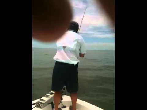 Fly fishing tripletail mobile bay Alabama