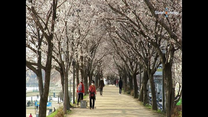 '능금 꽃 피는 고향'의 봄