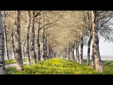 Русская весна - YouTube